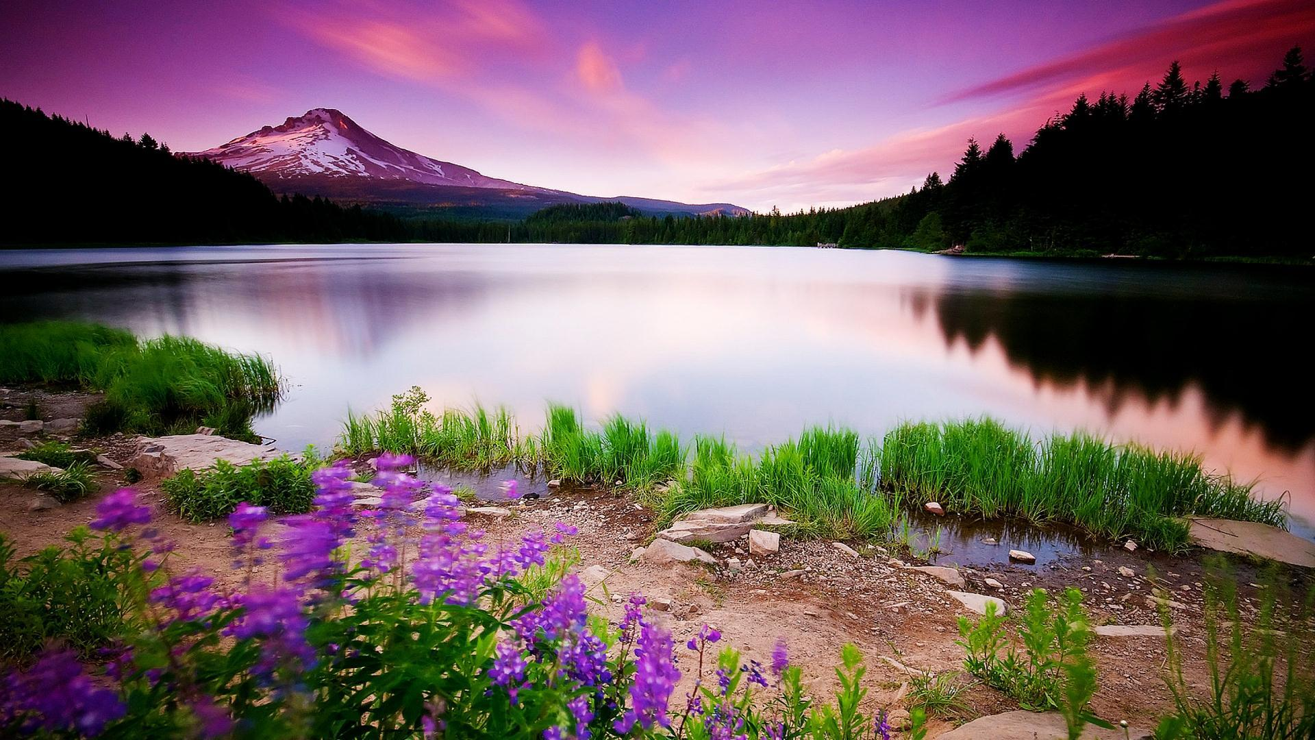 Nature Background wallpaper – Creativity at Its Best