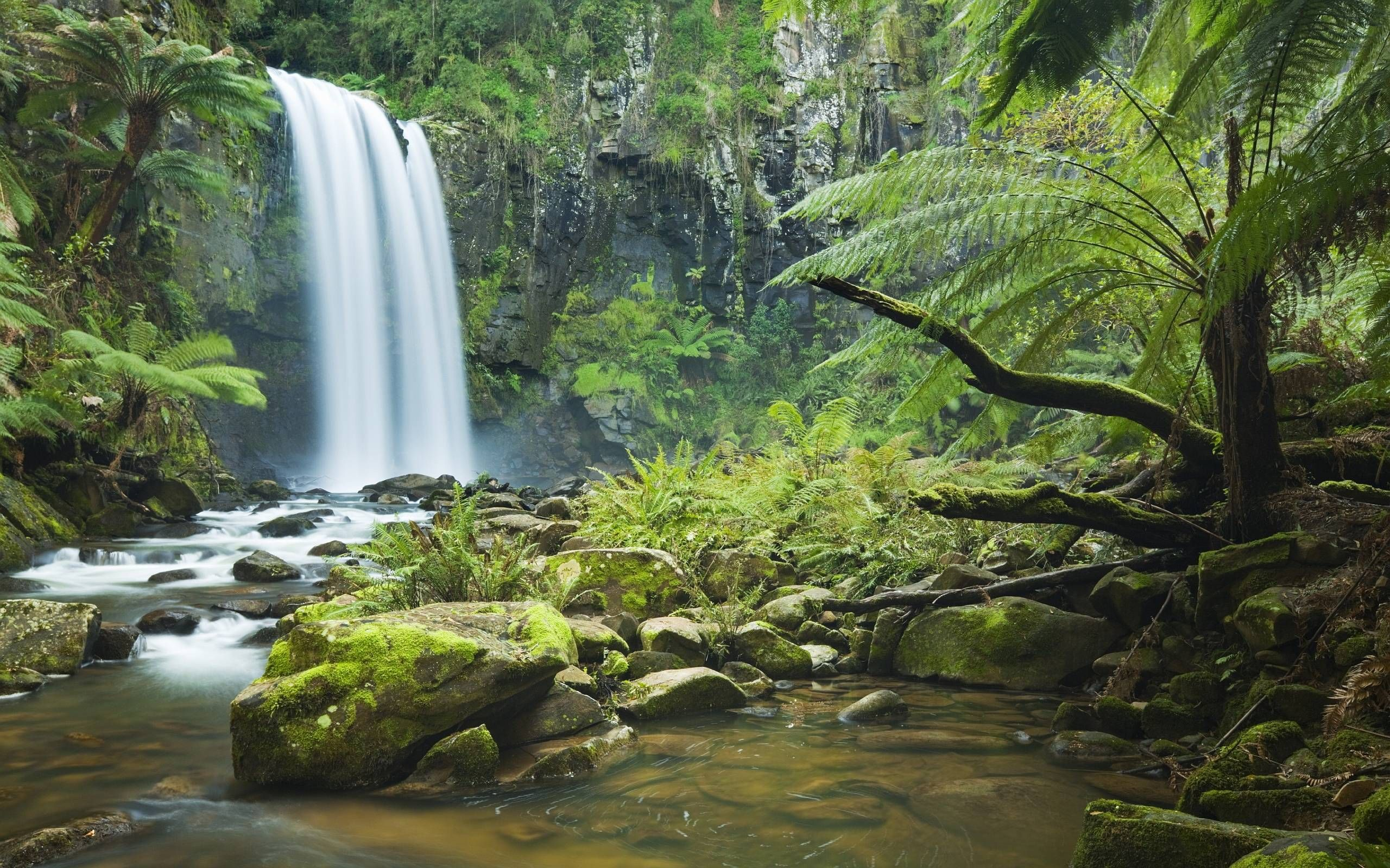 How to Choose the Right Background for Your Room – Rainforest Wallpaper