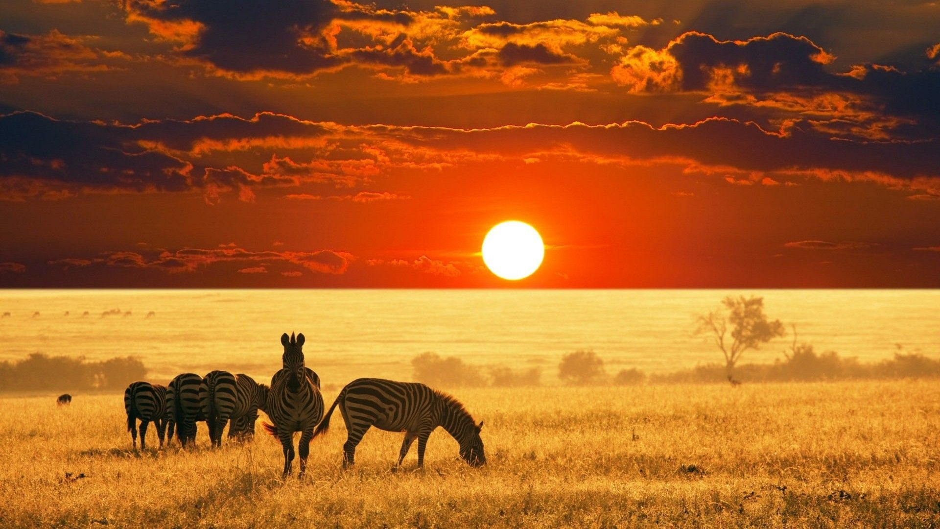 Top Safari wallpaper Ideas – How to Make Your Own