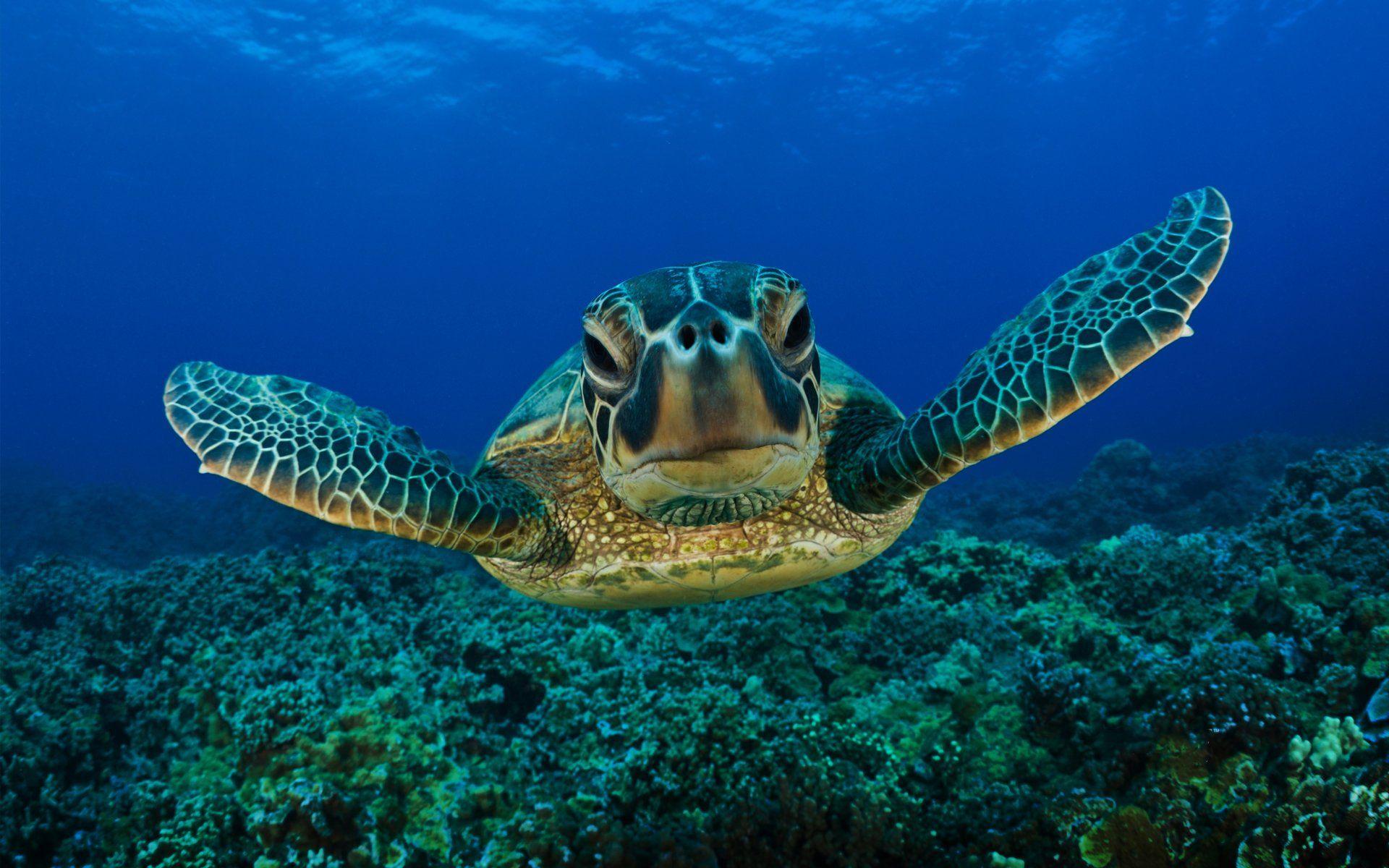 Best background Ideas – Sea Turtle wallpaper