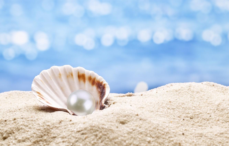 Making Seashell Wallpaper Good