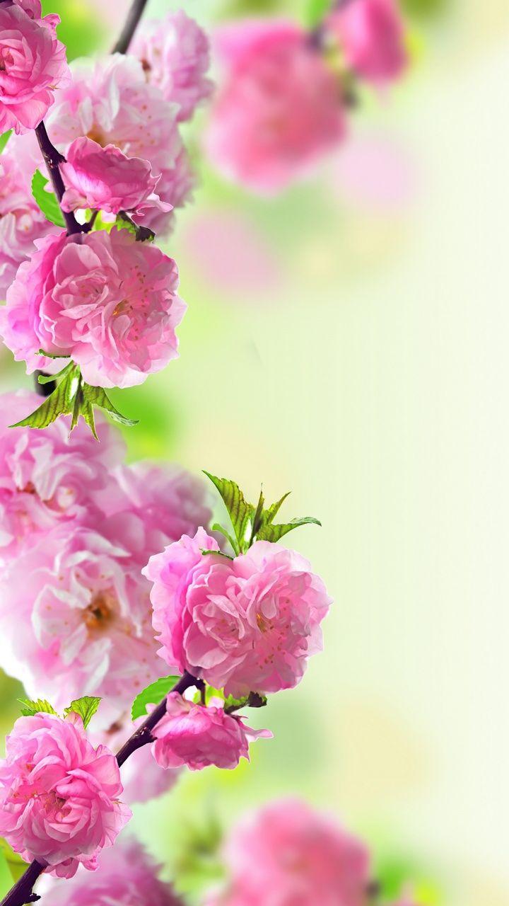 Spring Phone Wallpaper Picture design