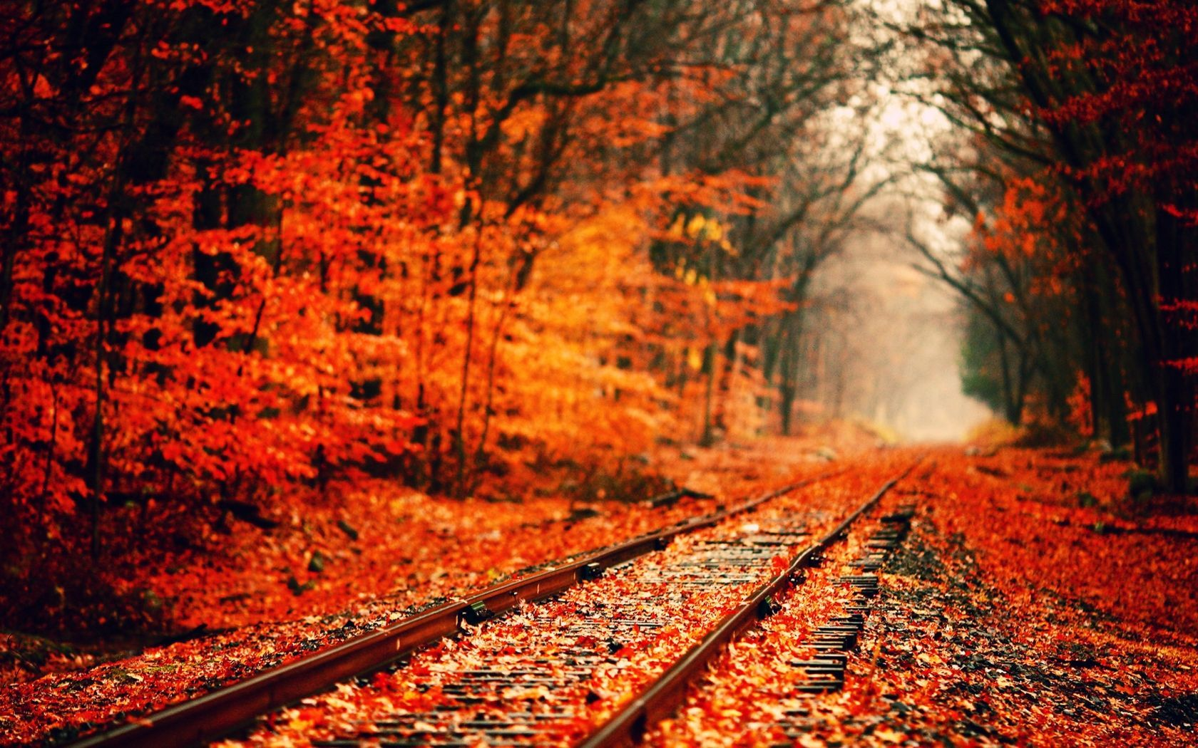 wallpaper Fall Pictures – How to Use Wallpaper Photos to Replace Windows Vista Or Home Interior Wallpaper