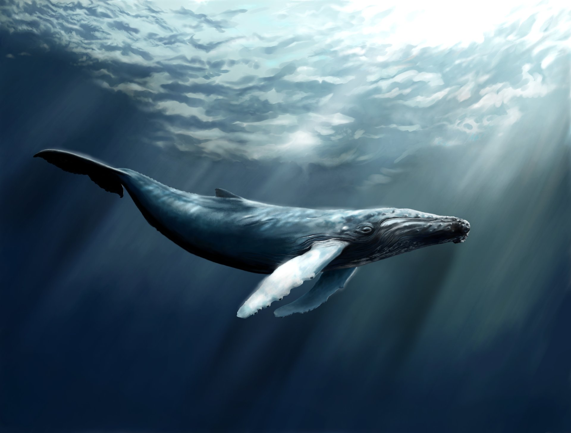 whale wallpaper design ideas for your computer