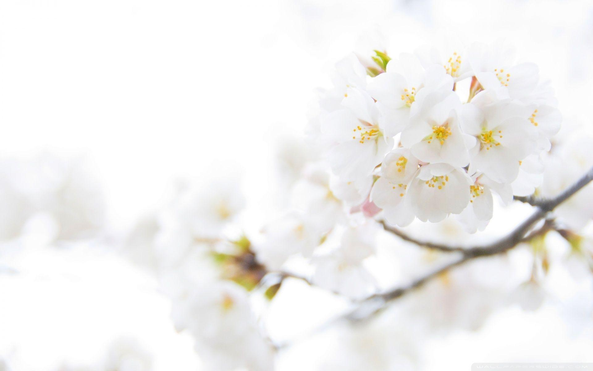 White Flower Wallpaper – Choosing the Right Design For Your Home